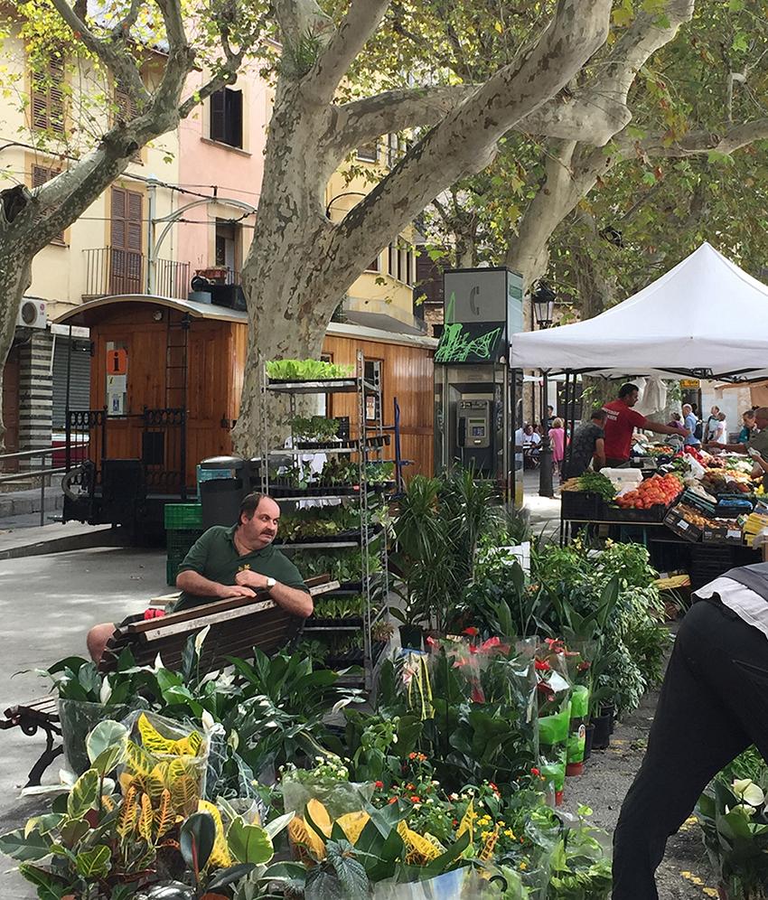 Markt Blumen Soller